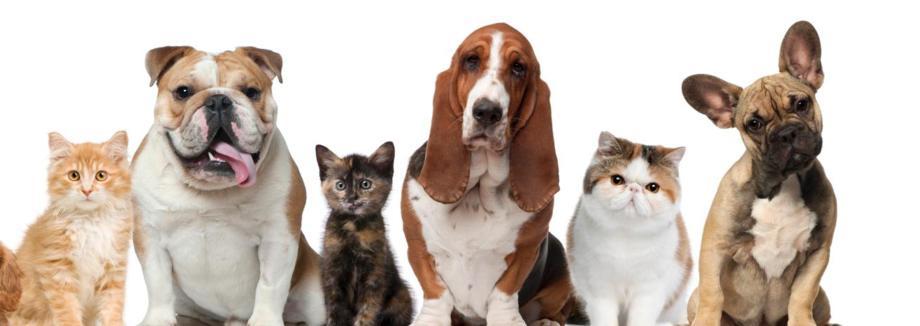 Tierhalterversicherung Pferd und Hund über Moneykig Tarifheck